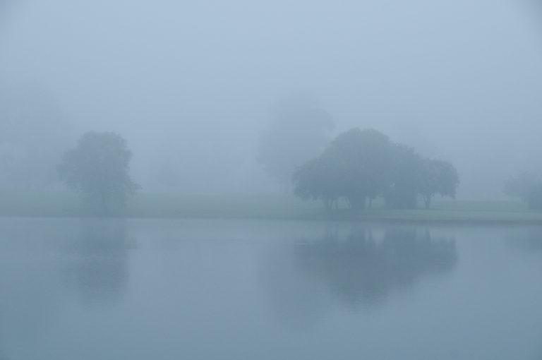 reflections, trees, lake, foggy morning, south carolina