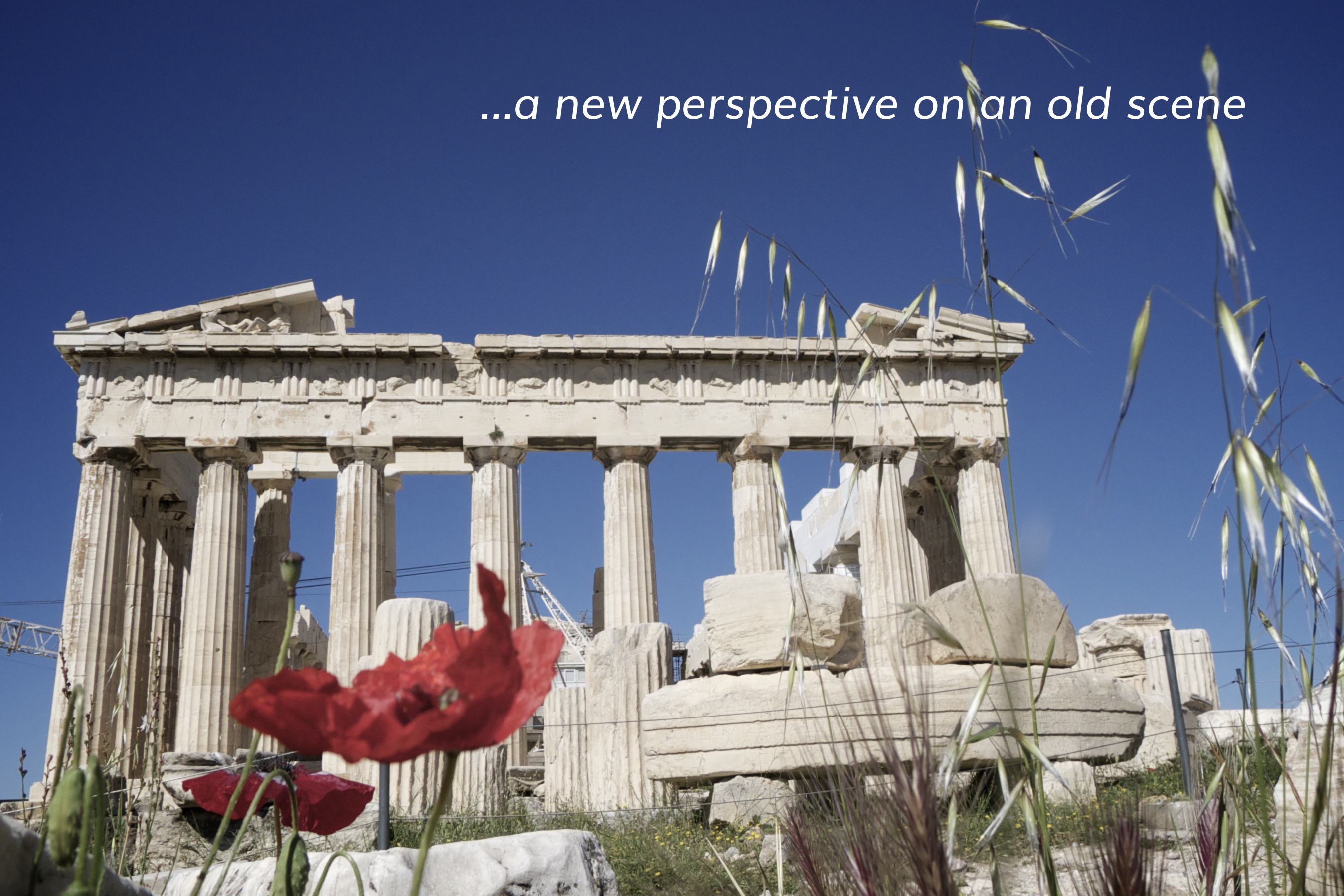 Low view of poppies in the foreground going to the Parthenon, Athens, Greece